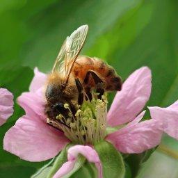"""""""'Cos I will be your honey bee"""" – Die Sache mit den Bienchen und Blümchen"""